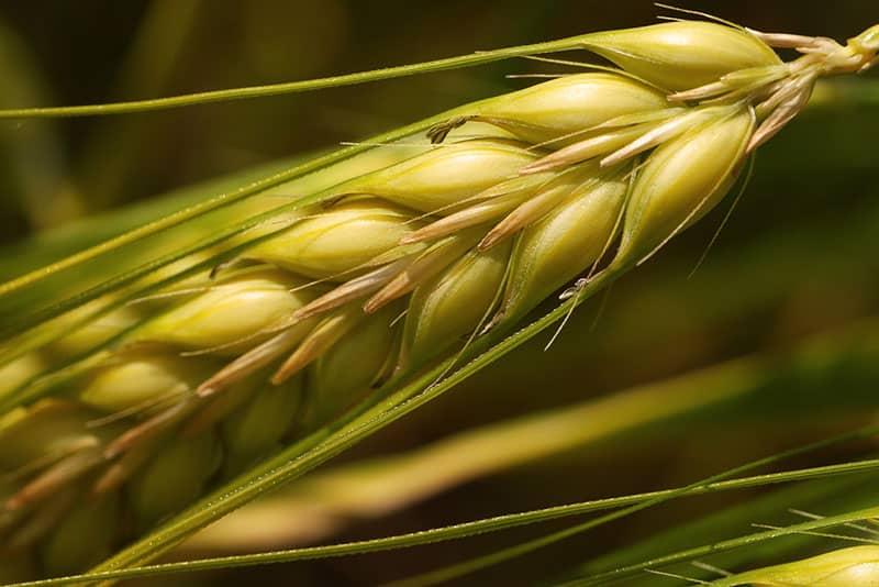 Los 5 tipos de alergias al gluten