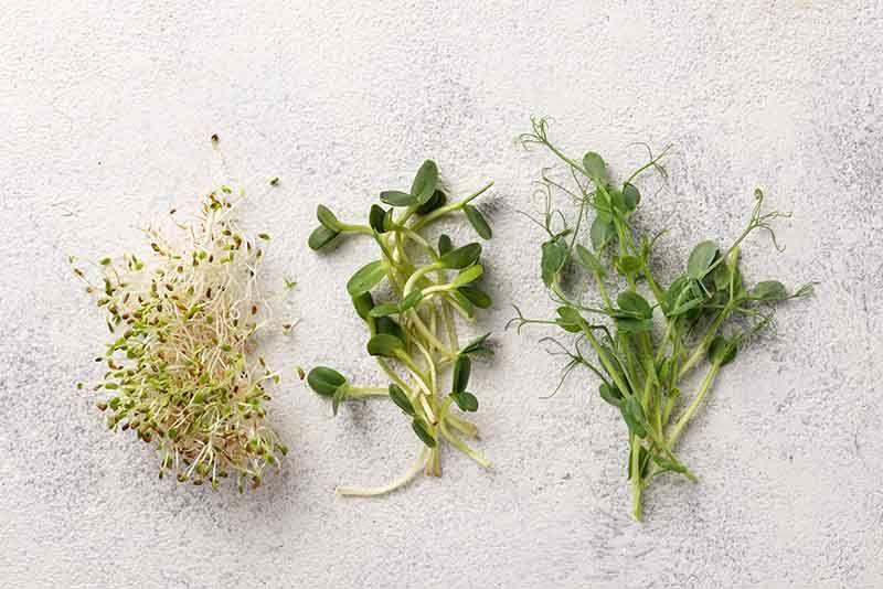 Germinados y brotes verdes un complemento vitamínico natural